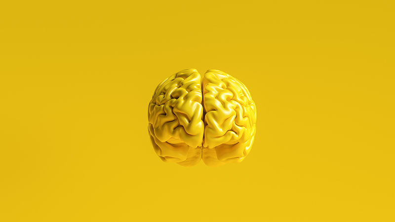 yellow human brain against yellow background Anatomical Model on floor